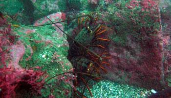 Seagrass research