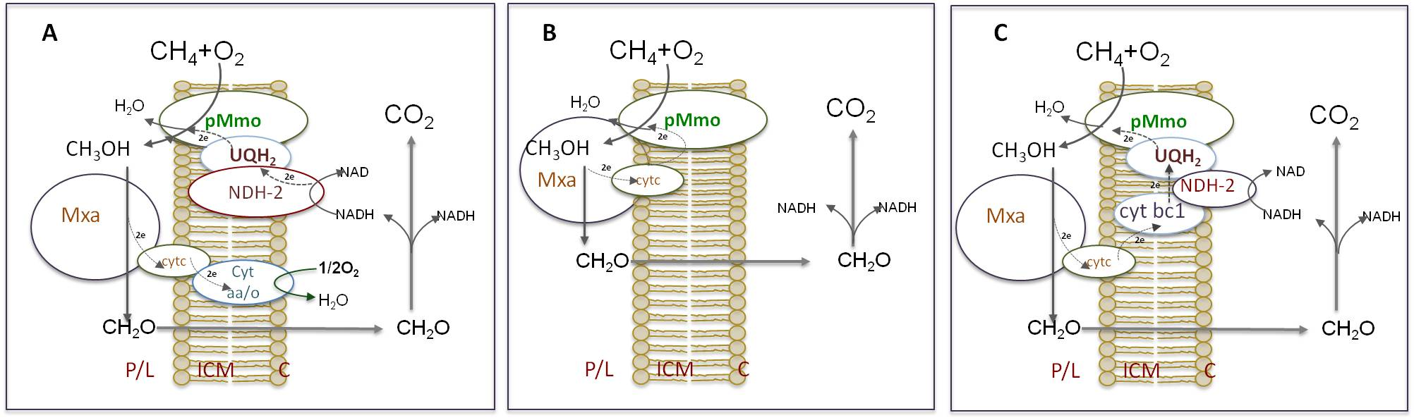 Possible modes of methane oxidation